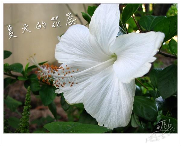 照片_0889-1.jpg