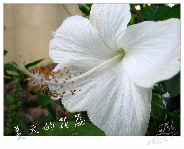 照片_0890-1.jpg
