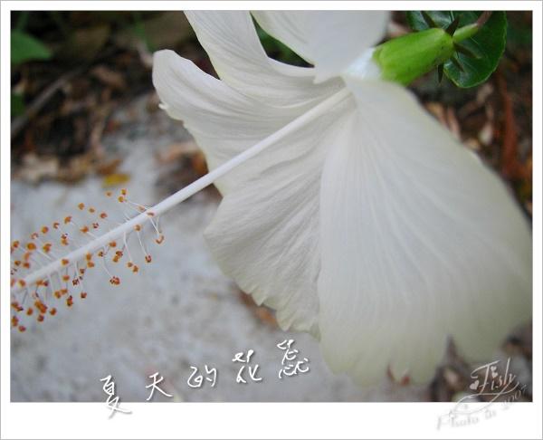 照片_0891-1.jpg