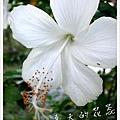照片_0894-1.jpg