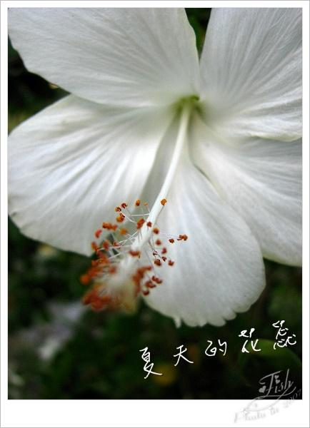 照片_0895-1.jpg