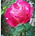 照片_0899-1.jpg