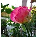 照片_0902-1.jpg