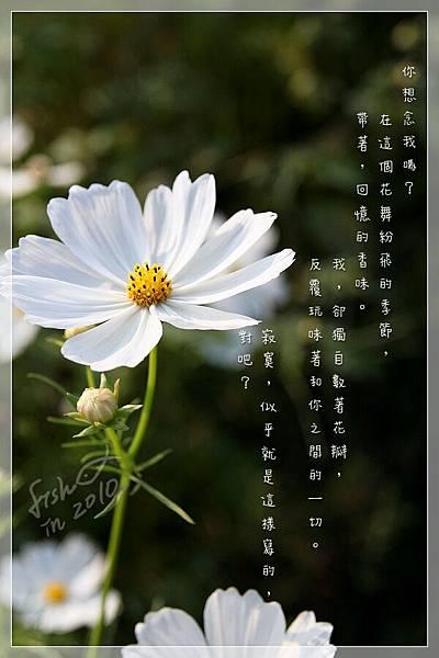 照片_3262-1.jpg