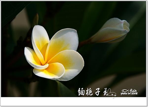 照片_0713-1.jpg