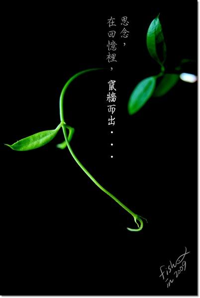 照片_1112-1.jpg