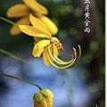 照片_1033-1.jpg
