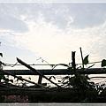 照片_2032-1.jpg