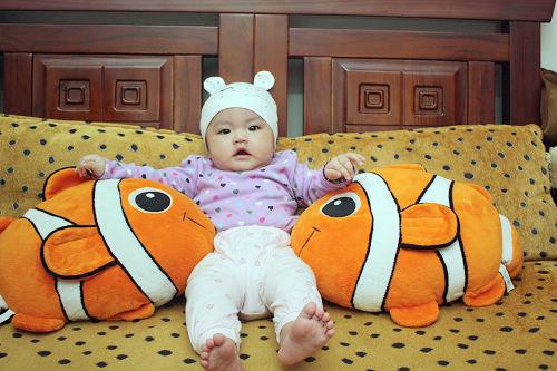麻麻去香港買的nemo魚