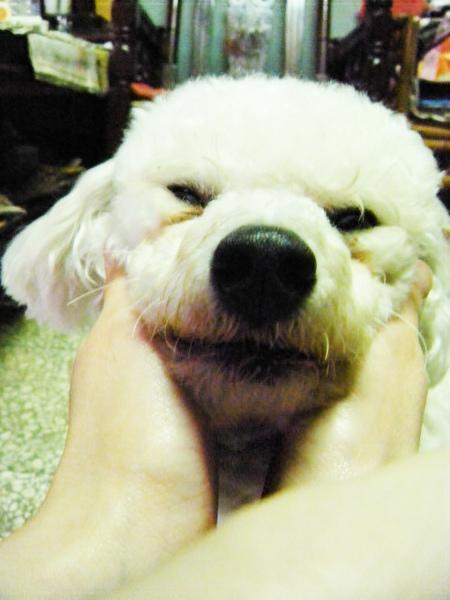 小屁是一隻流浪犬喔!!遇到好麻咪了~
