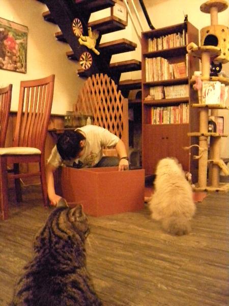 老闆娘~拿了新櫃子!一群貓非常好奇