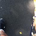 火狐截圖_2015-09-14T05-49-44.090Z