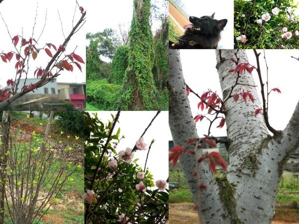 20100221中科大草園.jpg