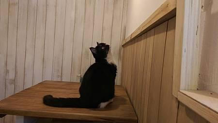 IMAG0100--寵物貓-2.jpg