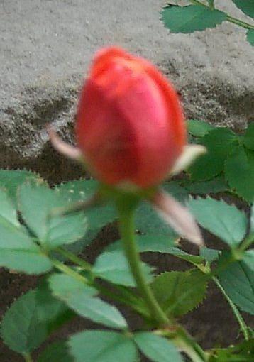IMAG0212_1.jpg