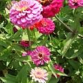 DSCF4904花朵.JPG