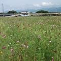 DSCF4956花海.JPG