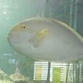 DSCF5539魚.JPG