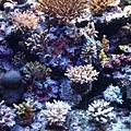 DSCF5564珊瑚.JPG