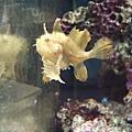 DSCF5577魚.JPG