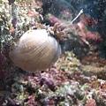 DSCF5585珊瑚.JPG