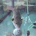 DSCF5592魚.JPG