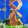 DSCF6243基隆悻存的小魚.JPG