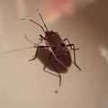 DSCF3307不知名的昆蟲.JPG