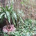 DSCF1752雨林區.JPG