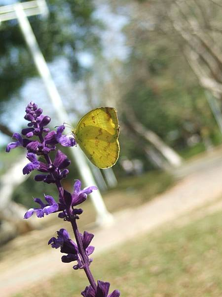 DSCF2374蝴蝶.JPG