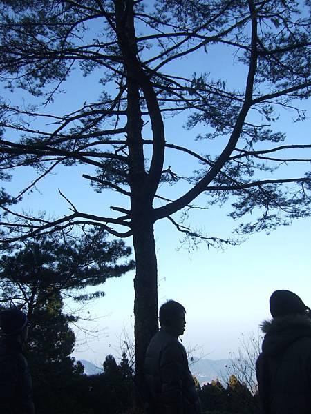 DSCF0756樹景.JPG