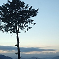 DSCF0722樹與雲.JPG
