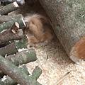 DSCF1731獅子兔.JPG