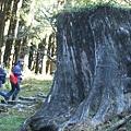 DSCF0793好大的樹幹.JPG