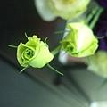 DSCF0923花朵.JPG