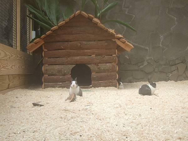 DSCF1730兔子的窩.JPG