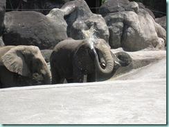 動物園 160