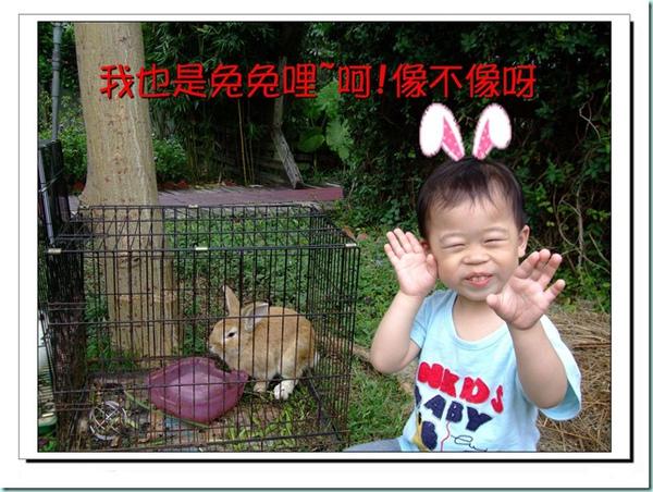 我也是兔兔