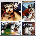 PhotoGrid_1515253957479.jpg
