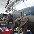 倫敦~自然史博物館-6.jpg