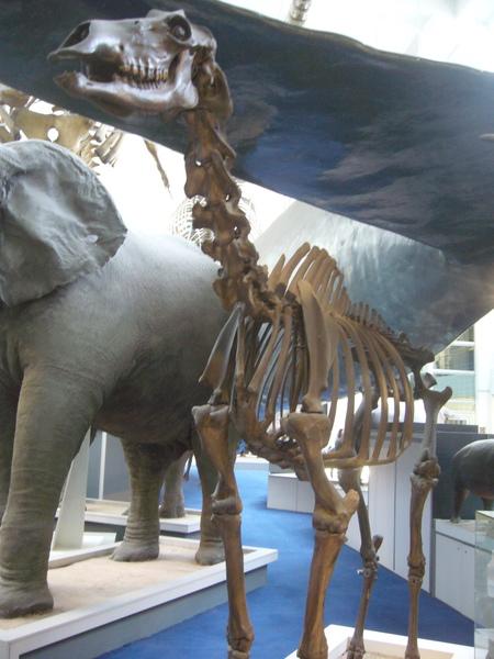 倫敦~自然史博物館-7.jpg