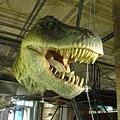 倫敦~自然史博物館-18.JPG
