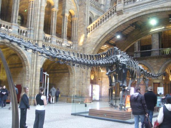 倫敦~自然史博物館-21.jpg