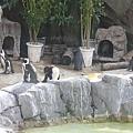 上野動物園-9.JPG
