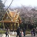 上野動物園-15-櫻花.JPG