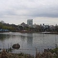 上野動物園-27.JPG