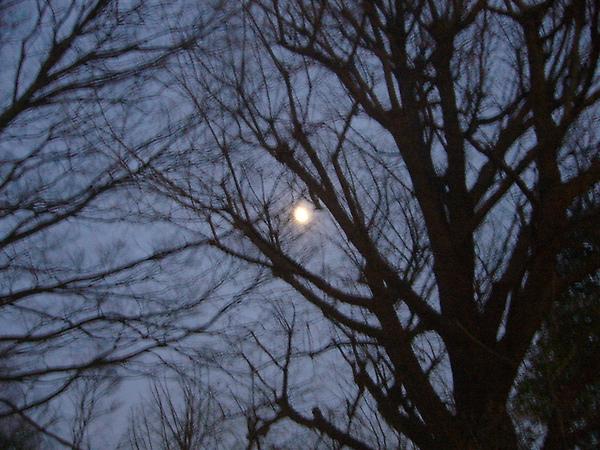 老公說,這是日本的月亮..jpg