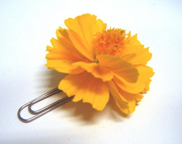 被截斷的小花