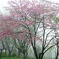 山櫻1.JPG