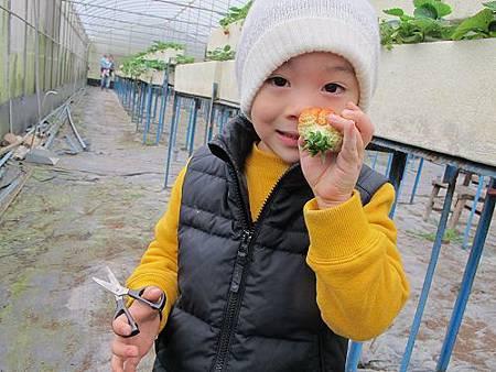 20140104採草莓 (72).jpg